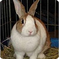 Adopt A Pet :: Lyric - Williston, FL