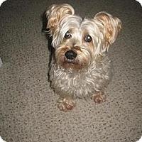 Adopt A Pet :: Hutch - Greensboro, NC