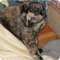 Adopt A Pet :: Fancy - Richfield, OH