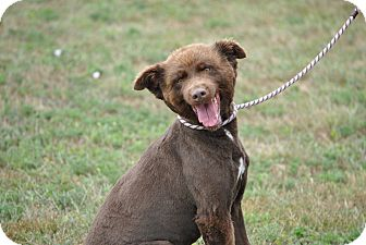 Chow Chow Mix Dog for adoption in Red Oak, Iowa - Ruby