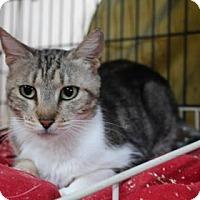Adopt A Pet :: Carrie - Tucson, AZ