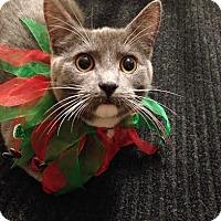 Adopt A Pet :: Jasmine - Eagan, MN
