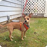 Adopt A Pet :: Chiquita - Gig Harbor, WA