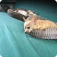 Adopt A Pet :: Sandy - Milton, FL