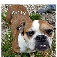 Adopt A Pet :: Sally - Decatur, IL