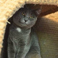 Adopt A Pet :: Maggie - Beacon, NY