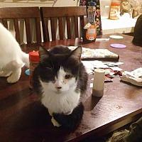 Adopt A Pet :: Bubbles - Locust, NC