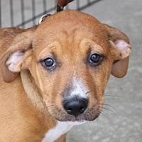 Adopt A Pet :: Tami - Monroe, GA