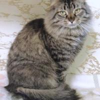 Adopt A Pet :: Cecily - Westville, IN