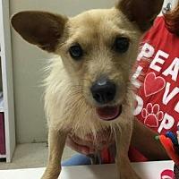 Adopt A Pet :: Amazon - Centerville, GA