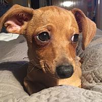 Adopt A Pet :: Leonardo - Madison, WI