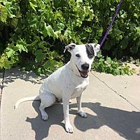 Adopt A Pet :: Monty - Gardena, CA