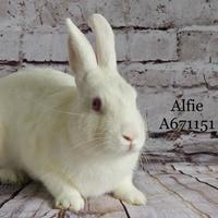 Adopt A Pet :: *ALFIE - Camarillo, CA