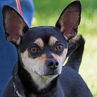 Adopt A Pet :: Cuervo - Grayslake, IL