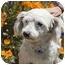 Photo 3 - Maltese Mix Dog for adoption in Berkeley, California - Harris