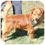 Photo 2 - Labrador Retriever/Chow Chow Mix Dog for adoption in Cincinnati, Ohio - Kanye