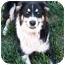 Photo 1 - Border Collie/Australian Shepherd Mix Dog for adoption in San Pedro, California - J.J.