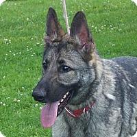 Adopt A Pet :: SAM - Tully, NY