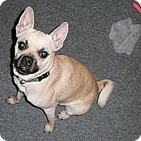 Adopt A Pet :: Paco - Hamilton, ON