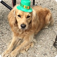 Adopt A Pet :: Champ - Sugarland, TX