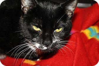 Domestic Shorthair Cat for adoption in Gettysburg, Pennsylvania - Emma