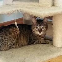 Adopt A Pet :: Cleo - Hinton, AB