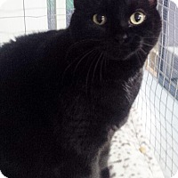 Adopt A Pet :: Jynx - Mission, BC