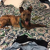 Adopt A Pet :: Ron Cephas Jones - Jersey City, NJ