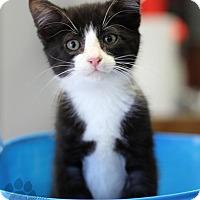 Adopt A Pet :: Lemmy (Nikki's foster) - Yukon, OK