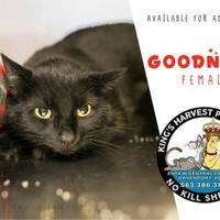 Adopt A Pet :: Goodness - Davenport, IA