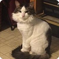 Adopt A Pet :: Juliet (COURTESY POST) - Baltimore, MD