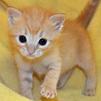 Adopt A Pet :: Julie - Alpharetta, GA