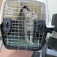 Adopt A Pet :: STELLA - Fort Walton Beach, FL