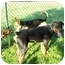 Photo 3 - Rottweiler Dog for adoption in Earleville, Maryland - Jackson