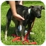 Photo 1 - Shepherd (Unknown Type) Mix Dog for adoption in Somerset, Pennsylvania - Anita