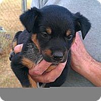 Adopt A Pet :: Skip - Conway, AR