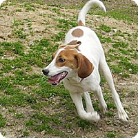 Adopt A Pet :: Grace - Centerpoint, IN