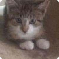 Adopt A Pet :: Dixie - Delmont, PA