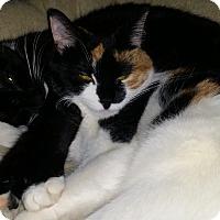 Adopt A Pet :: Mellow and Jazz - Columbia, MD