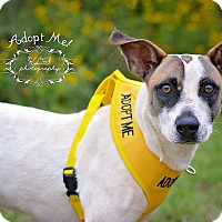 Adopt A Pet :: Paisley - Fort Valley, GA