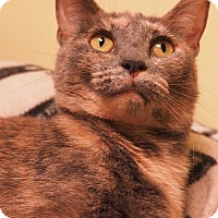 Adopt A Pet :: Camille - Cleveland, OH