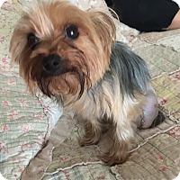 Adopt A Pet :: Daisy - Leesburg, FL