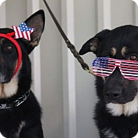 Adopt A Pet :: Dakota & Blue - Adoption Pend. - Houston, TX