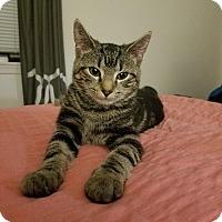 Adopt A Pet :: Tula - Trevose, PA
