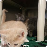 Adopt A Pet :: Fantasia - Chippewa Falls, WI