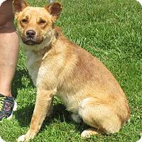 Adopt A Pet :: Mr. Nubs - Reeds Spring, MO