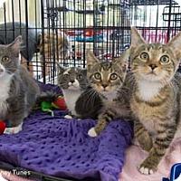 Adopt A Pet :: Speedy - Merrifield, VA
