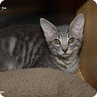 Adopt A Pet :: Zeke - Marlboro, NJ
