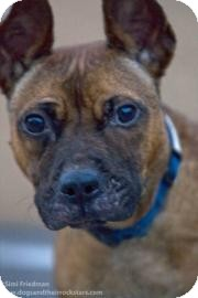 Basenji Mix Dog for adoption in Brooklyn, New York - Liza