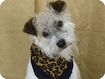 Terrier (Unknown Type, Small) Mix Dog for adoption in Princeton, Kentucky - Lynryd Skynryd